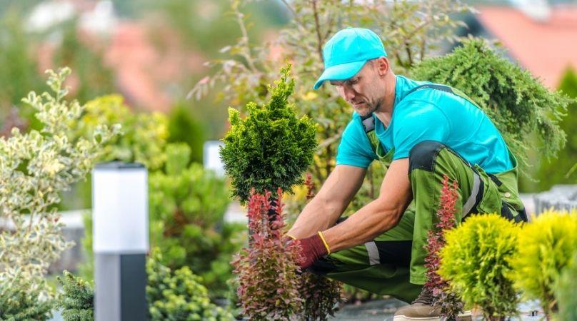 Gardener planting small tree
