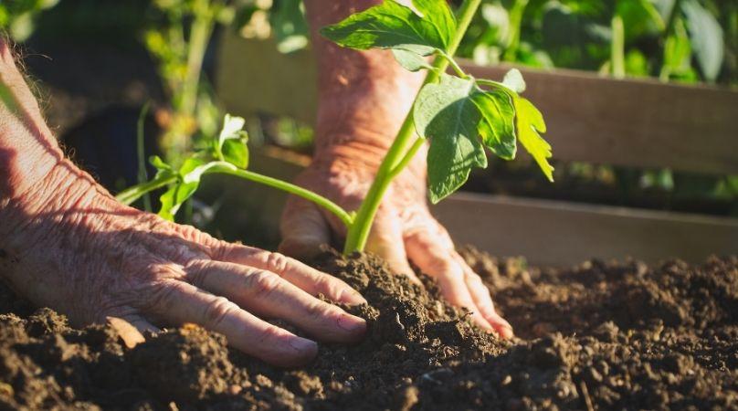Planting veg in soil