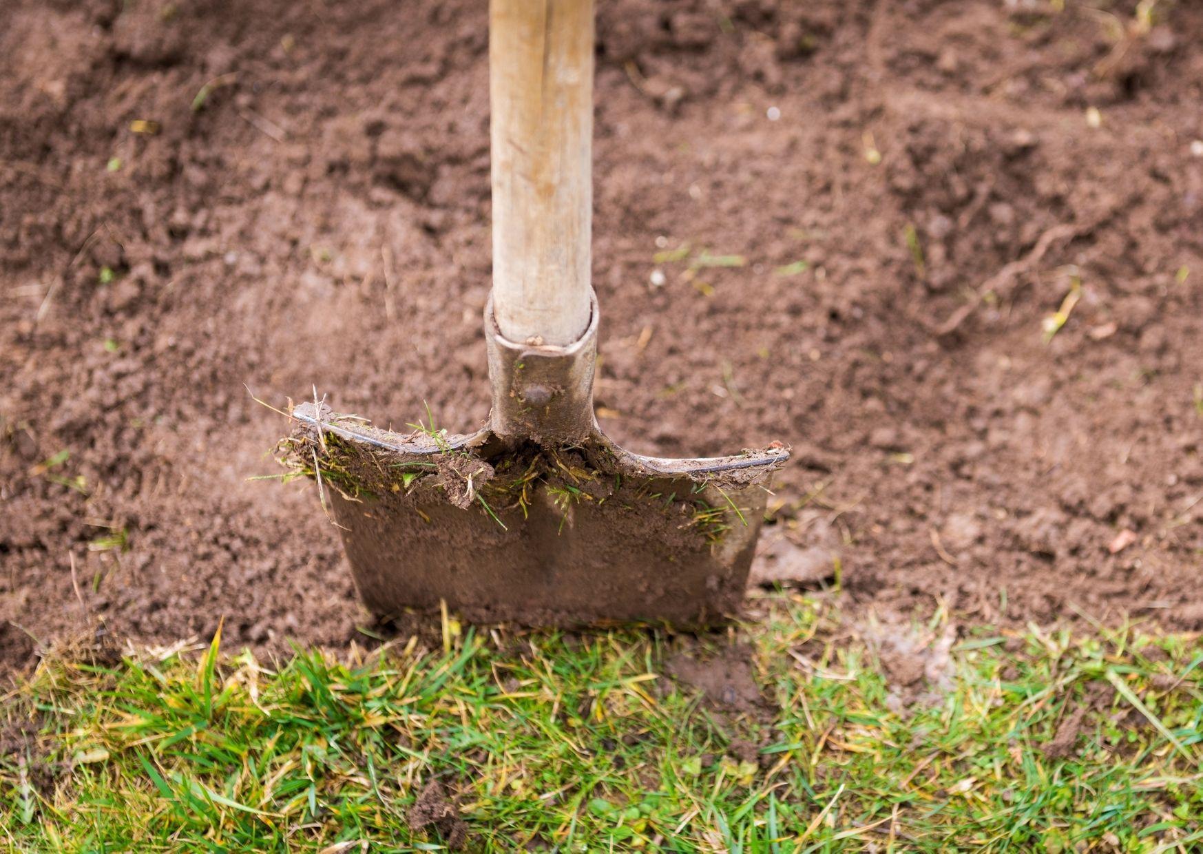 digging grass